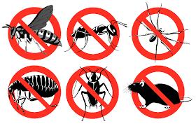 مكافحة حشرات بمكة