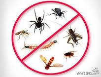 مكافحة حشرات مكة المكرمة