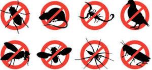 مكافحة حشرات بالباحة