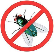 مكافحة حشرات مكة
